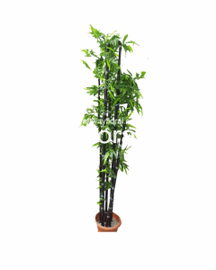 This is an image of an artificial-black bamboo plant. H: ~6.5 Feet