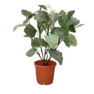 Artificial Fittonia Argyroneura~2 Feet