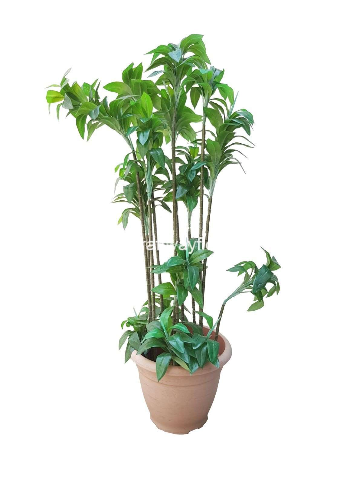 artificial green dracaena reflexa - craftway floral & gifts