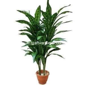 Kaempferia Plant ~3.5 Feet