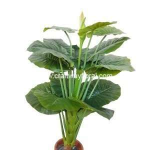 Image contains Artificial Big-leaves Alocasia Macrorrhizos with flower buds, also known as giant taro plant, standing ~4.5 Feet high