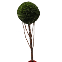 Artificial Topiary Tree ~5 Feet