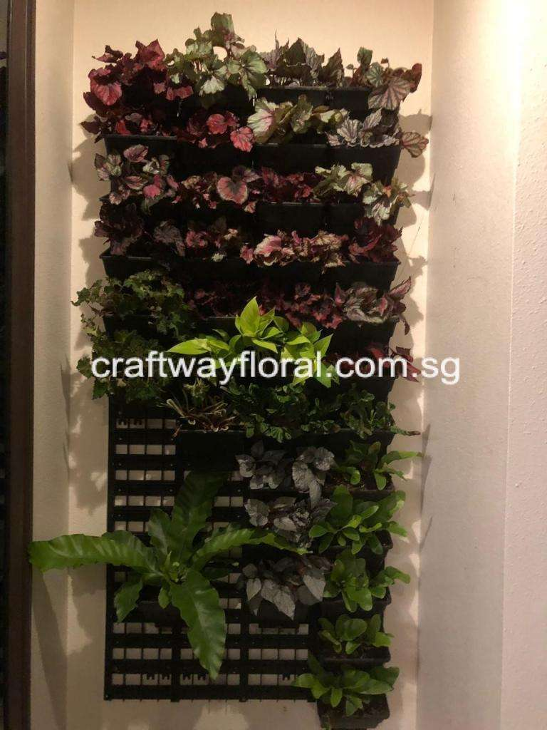 green wall simply means having a wall covered with greenery with a growing medium to reduce an indoor temperature and giving fresh air quality.