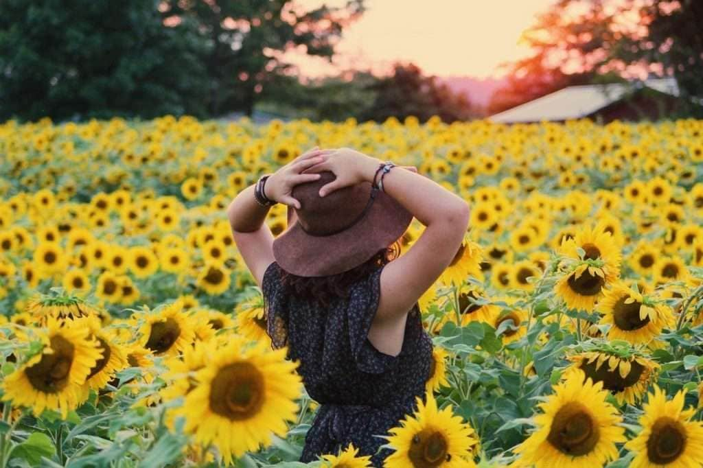 Picture of a woman standing in a field filled with beautiful bright sunflowers.