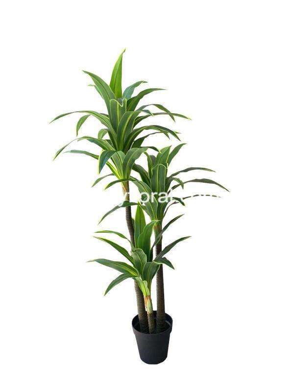 The Cordyline has long, leather-like leaves that looks like a rosette with an upright sprout.