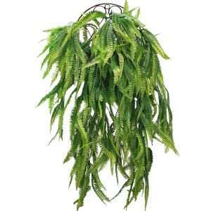 The Polypodium is classified as a kind of fern.They are low-spreading with narrow, long fronds.